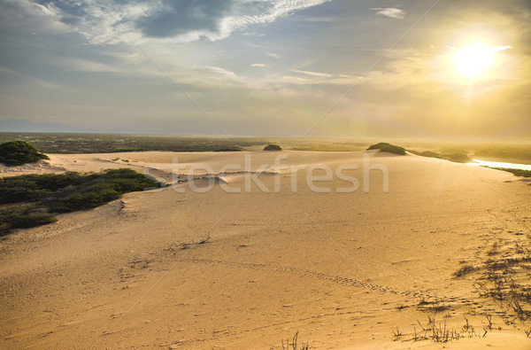 Sand Dune and Sunlight Stock photo © jkraft5
