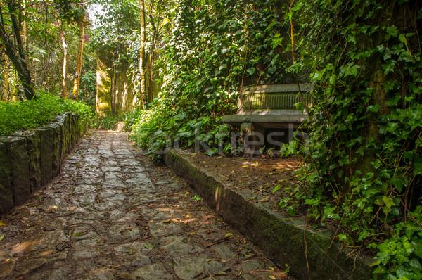 Kő út erdő park Bogotá Colombia Stock fotó © jkraft5