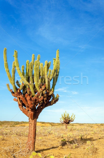 два высокий высушите бесплодный пустыне Сток-фото © jkraft5