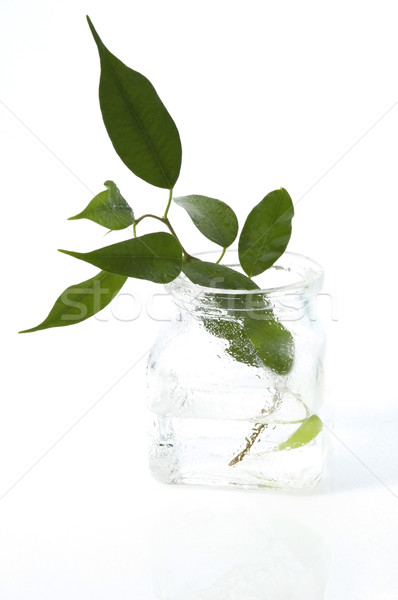 young plant in the water Stock photo © joannawnuk