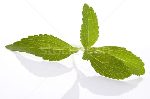 Stevia Rebaudiana leafs isolated on white background  Stock photo © joannawnuk