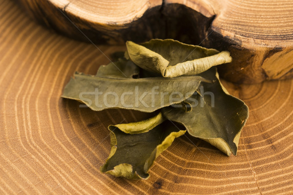 Cassia leaves Stock photo © joannawnuk