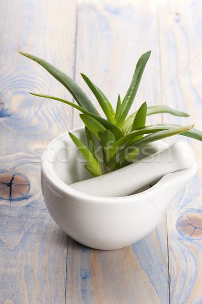 Aloe gyógynövény egészség gyógyszer bőr növény Stock fotó © joannawnuk