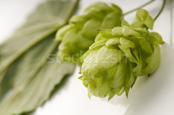 Hop cone and leaves on white background  Stock photo © joannawnuk