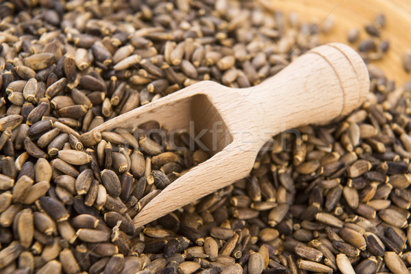 Stock photo: Seeds of a milk thistle (Silybum marianum, Scotch Thistle, Maria