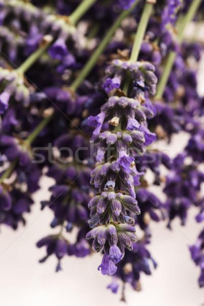 lavender flower Stock photo © joannawnuk