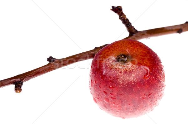 Geïsoleerd paradijs rode appel tak voedsel appel Stockfoto © joannawnuk