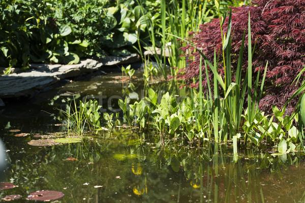 Decoratief vijver tuin water rock mooie Stockfoto © joannawnuk