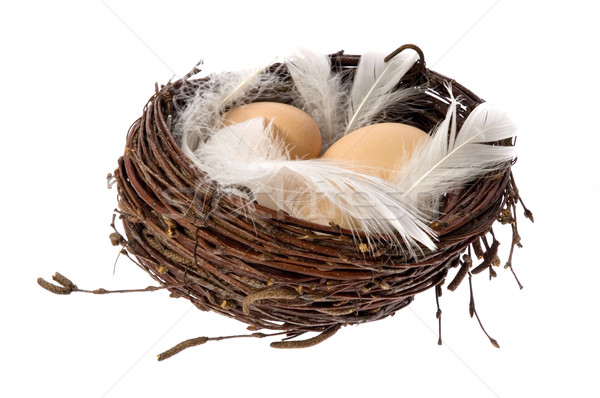 Nest with eggs and feathers Stock photo © joannawnuk