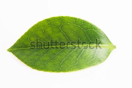 緑茶 葉 孤立した 白 夏 緑 ストックフォト © joannawnuk