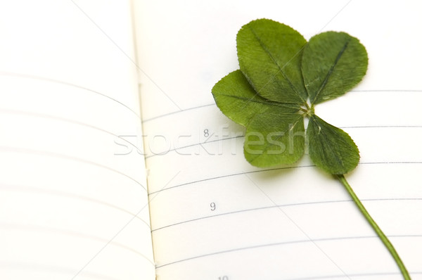 Five Leaf Clover and New Day. Stock photo © joannawnuk