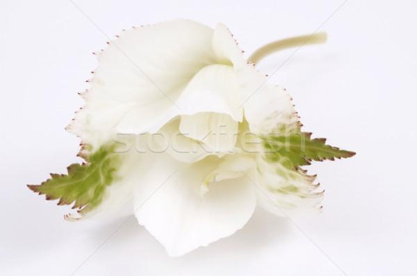 Bellezza bella fresche crema concetto vicino Foto d'archivio © joannawnuk