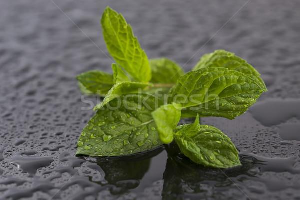 свежие сырой мята листьев жизни здорового Сток-фото © joannawnuk