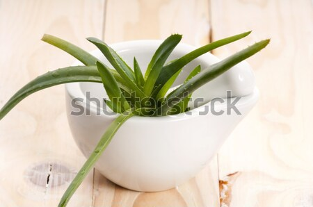 Aloe vera - herbal medicine  Stock photo © joannawnuk