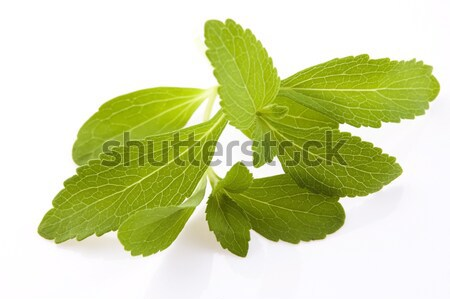 Stok fotoğraf: Yalıtılmış · beyaz · yaprak · bitki · stüdyo · taze
