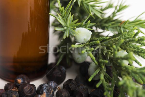 Achtergrond olie studio tak wellness Stockfoto © joannawnuk