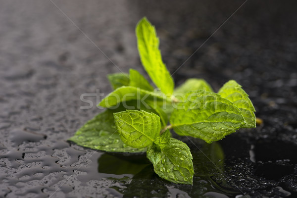 Fresh raw mint leaves Stock photo © joannawnuk