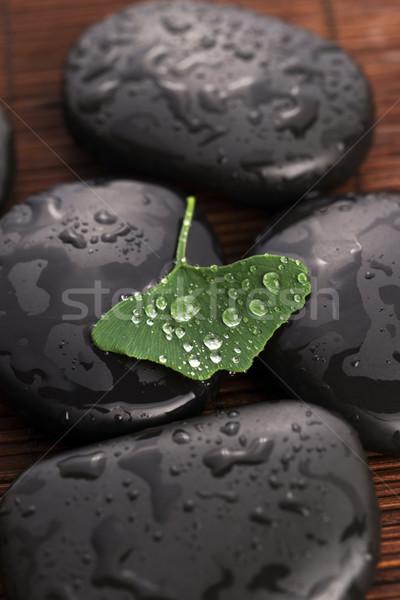 zen stones and ginko biloba leaves with water drops Stock photo © joannawnuk