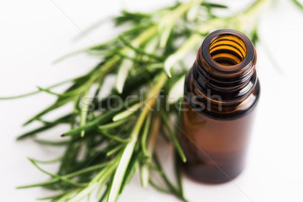 Stock fotó: Rozmaring · illóolaj · virágok · természet · gyógyszer · kék