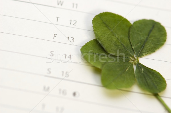 Five Leaf Clover and 13 Friday Stock photo © joannawnuk