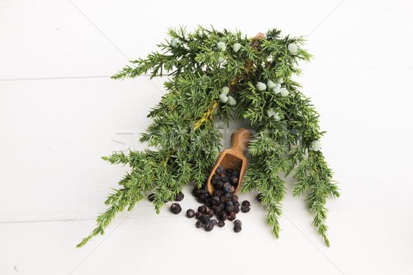 Juniper plant with berries Stock photo © joannawnuk