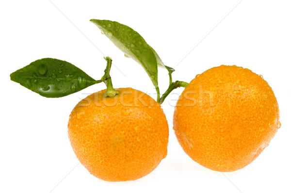 Mandarin tavasz gyümölcs nyár trópusi ág Stock fotó © joannawnuk
