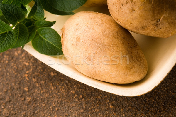 Stock photo: New potato and green dill