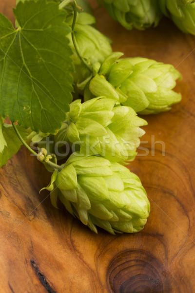 Stock photo: Fresh green hop cones