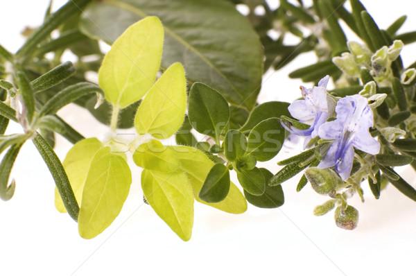 Friss gyógynövények izolált fehér rozmaring oregano Stock fotó © joannawnuk