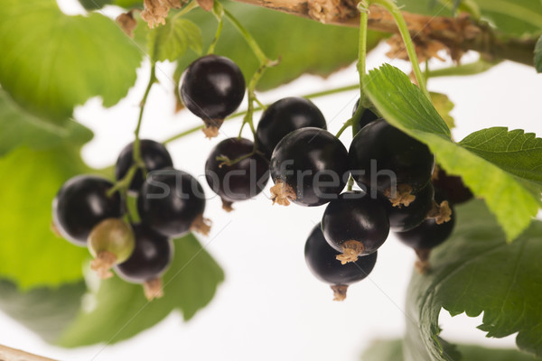 Blackcurrant fruit full of vitamins Stock photo © joannawnuk