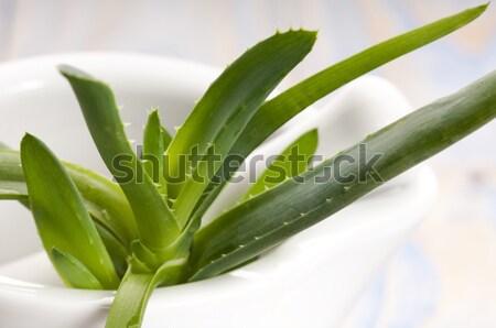 Aloe vera - herbal medicine  Stock photo © joannawnuk
