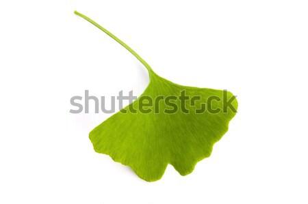 Stock fotó: Levél · izolált · fehér · egészséges · fotózás · senki
