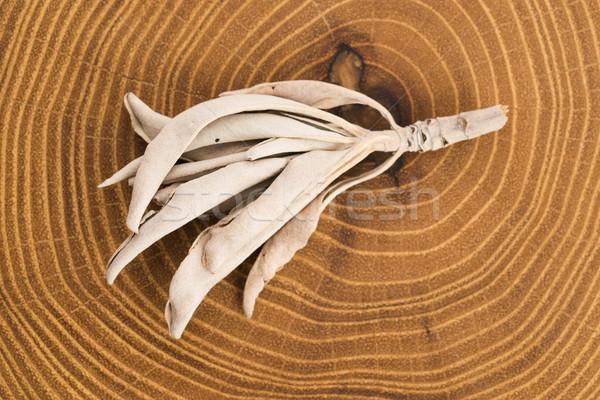 Gedroogd witte salie achtergrond bladeren cultuur Stockfoto © joannawnuk
