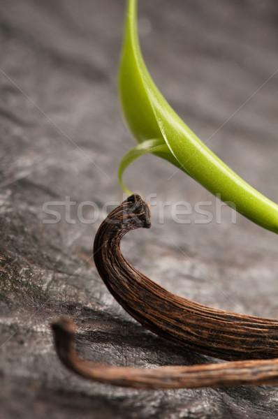 Vanilla Planifolia Vine and Dried Vanilla Pods  Stock photo © joannawnuk