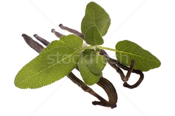 Fraîches sauge vanille fèves herbes épices Photo stock © joannawnuk