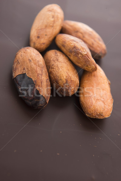 Cacau feijões leite chocolate chocolate escuro grupo Foto stock © joannawnuk