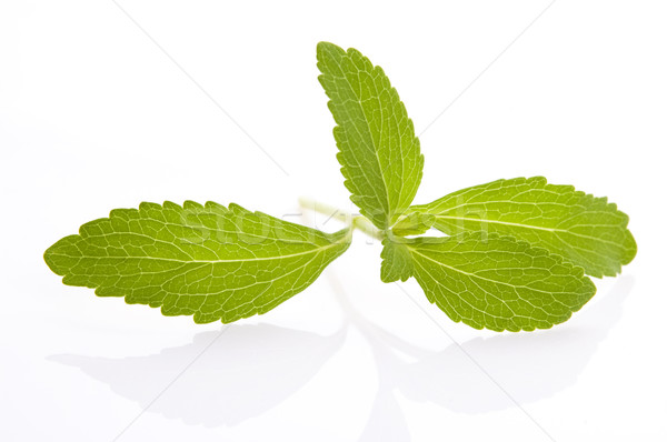 Stevia Rebaudiana leafs isolated on white background  Stock photo © joannawnuk