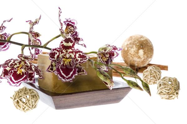 Orchidea fiore primavera legno natura Foto d'archivio © joannawnuk