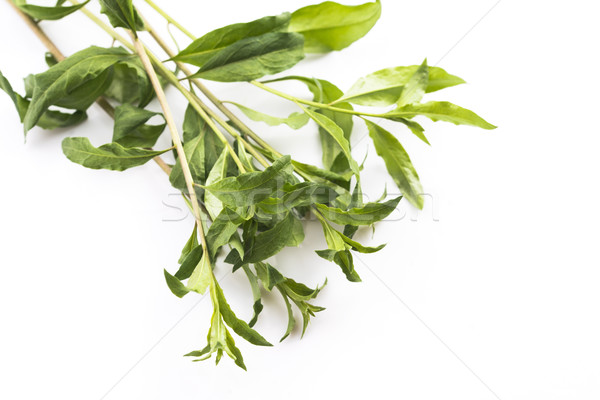 Goji leaf isolated on white background Stock photo © joannawnuk