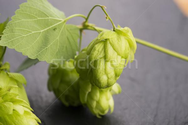 Fresh green hop cones Stock photo © joannawnuk