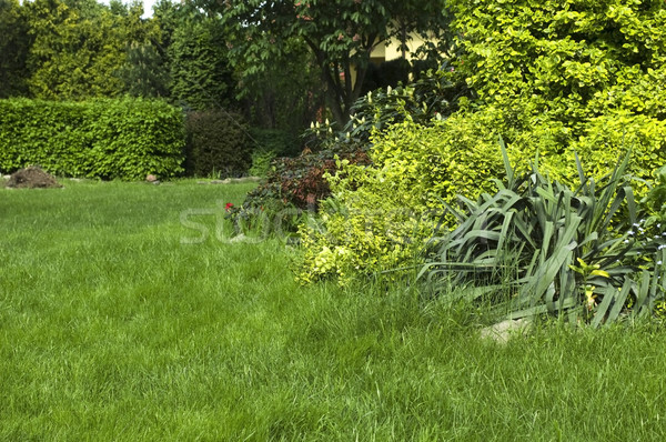 Paisible jardin printemps ciel herbe maison Photo stock © joannawnuk