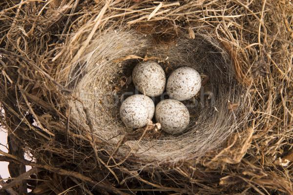 Stock foto: Detail · Vogel · Eier · Nest · Ei · Gruppe