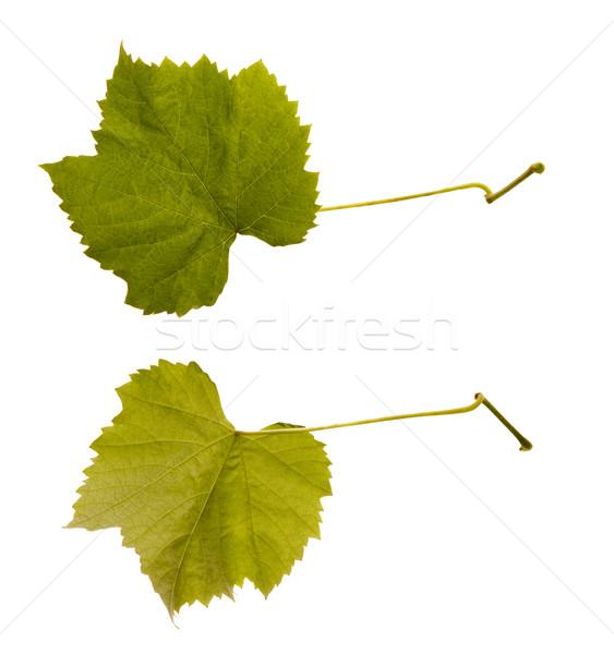 wine. one leaf - two sides Stock photo © joannawnuk
