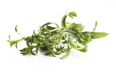 Stock photo: Goji leaf isolated on white background