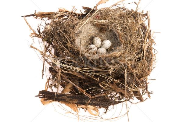 詳細 鳥 卵 巣 卵 グループ ストックフォト © joannawnuk
