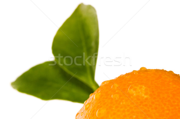 mandarin, calamondin Stock photo © joannawnuk