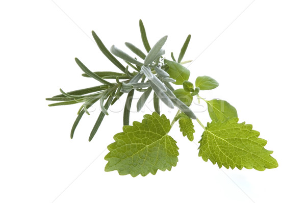Photo stock: Fraîches · herbes · romarin · citron · baume · isolé