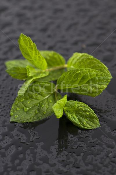 Stockfoto: Vers · ruw · mint · bladeren · leven · gezonde