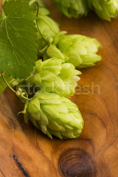 Stock photo: Fresh green hop cones