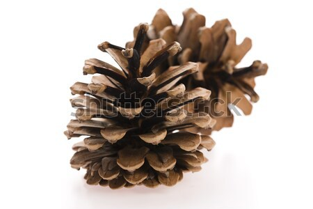 brown pine cone isolated on white background  Stock photo © joannawnuk